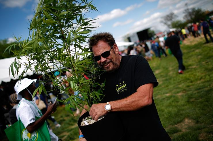 A vendor of hydroponic growing equipment carries a marijuana plant to his vending stall during the first annual National Cannabis Festival April 23, 2016 in Washington, DC. The festival was created for proponents of legalization to celebrate the partial legalization of marijuana in the nation's capital and states aroud the nation.